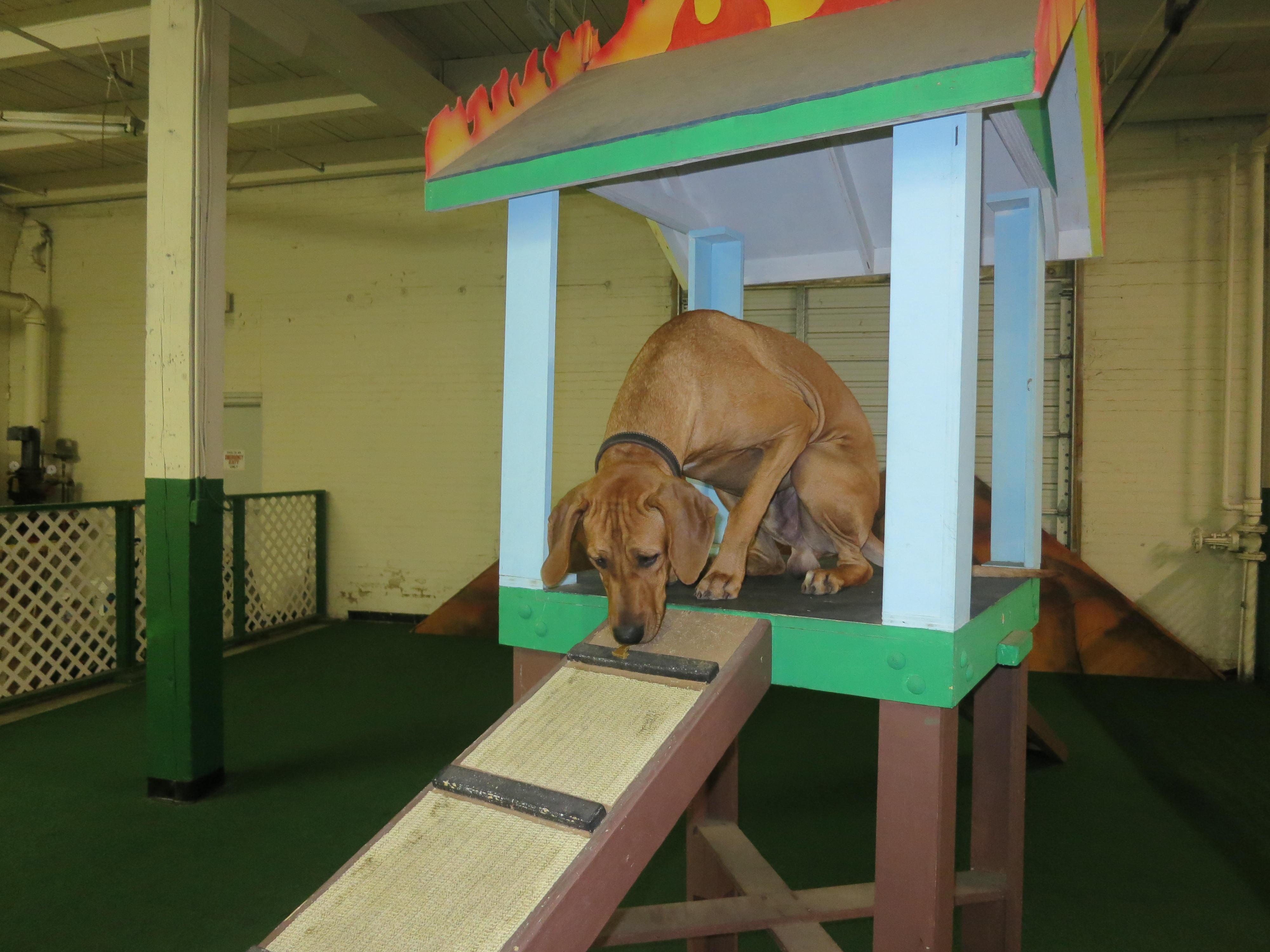 Indoor Dog Parks Houston