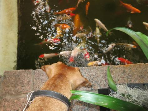 dog friend hotel houston