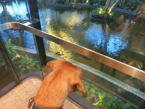 dog friendly hotel houston