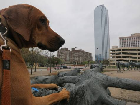 dog friendly dallas