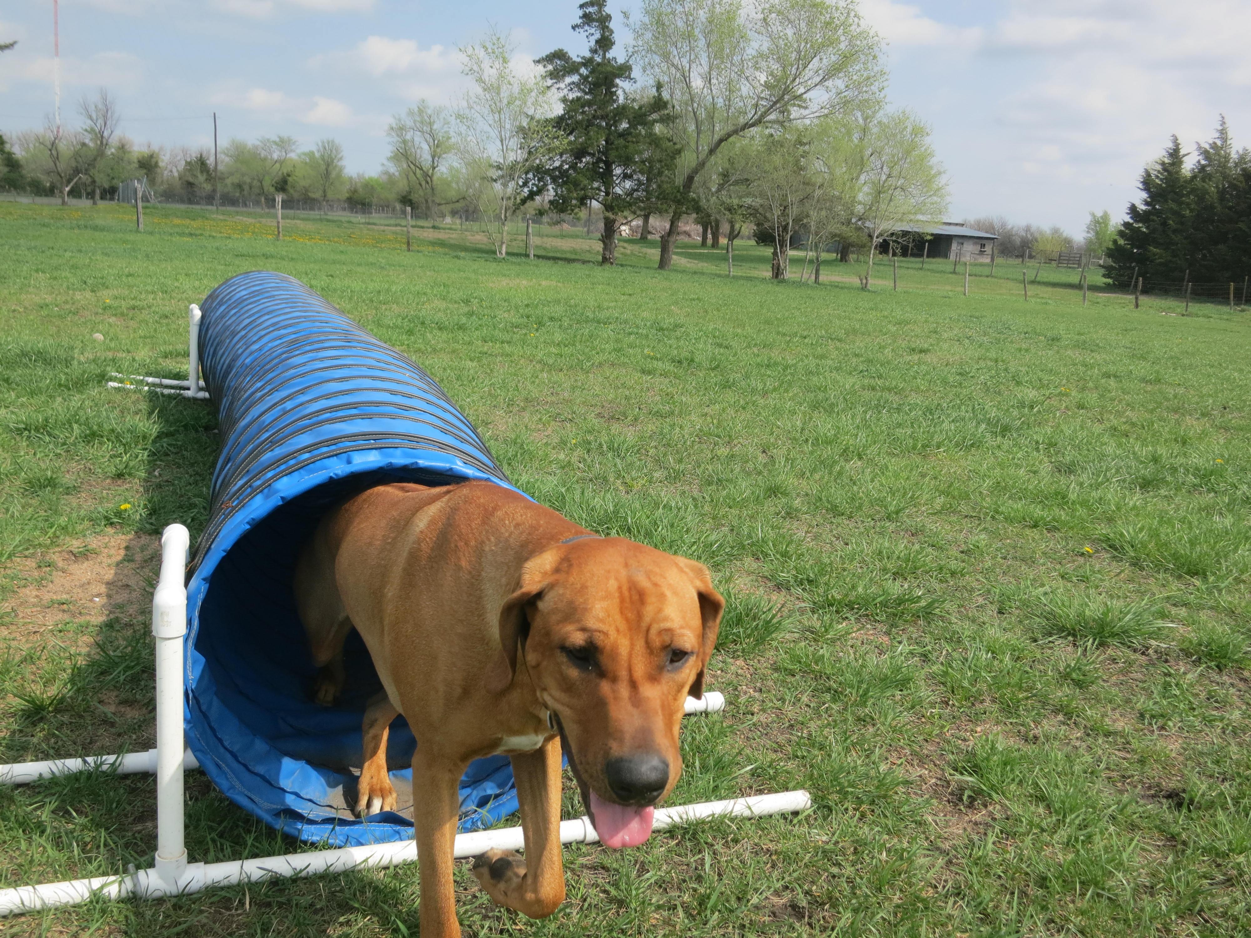 Dog Kennels Wichita Ks