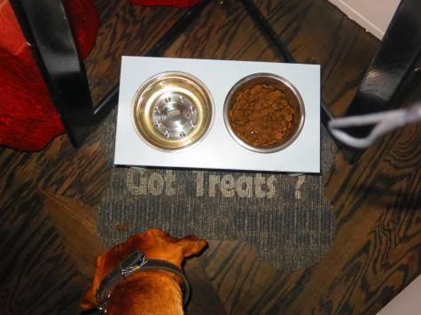 dog friendly hotel denver