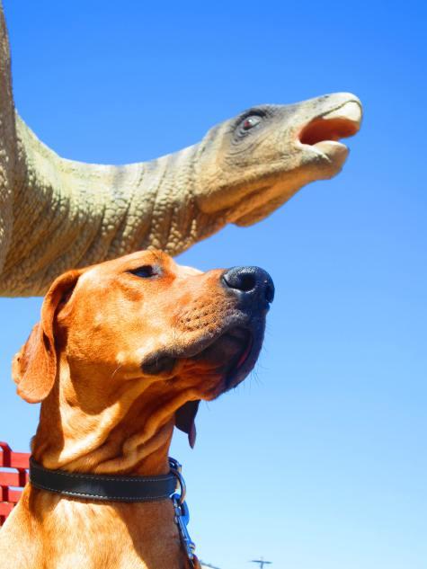 dog friendly denver