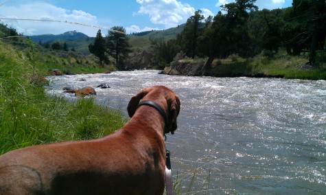 dog friendly montana
