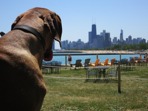Dog Friendly Outdoor Cafe Chicago