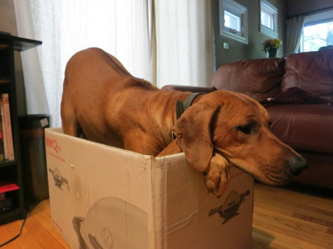 pet friendly blog