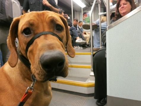 dog friendly boston