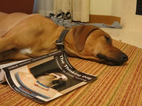 dog friendly blog