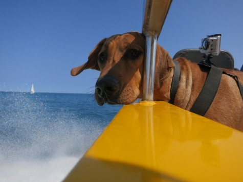 things to do with your dog rhodesian ridgeback