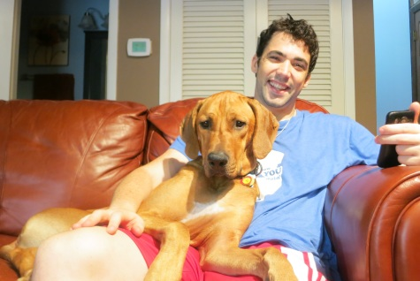 pet friendly blog, rhodesian ridgeback