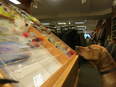 pet friendly travel, rhodesian ridgeback
