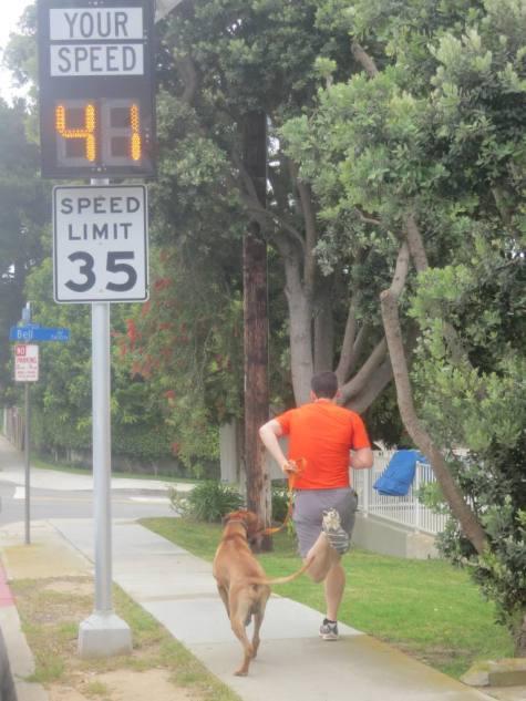 Pet friendly blog, dog adventure, rhodesian ridgeback