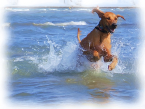rhodesian ridgeback, pet adventure, pet blog