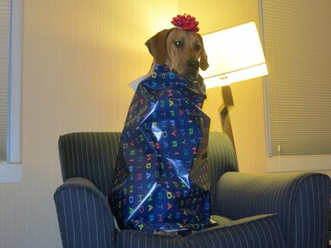 pet friendly blog, dog blog, rhodesian ridgeback