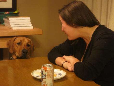rhodesian ridgeback, pet friendly blog