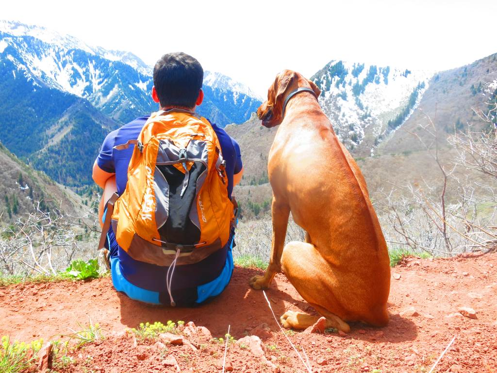 rhodesian ridgeback, dog adventure