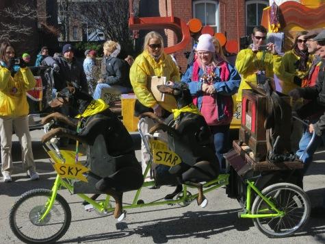 Beggin Pet Parade