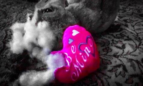 pet valentine, pet blog