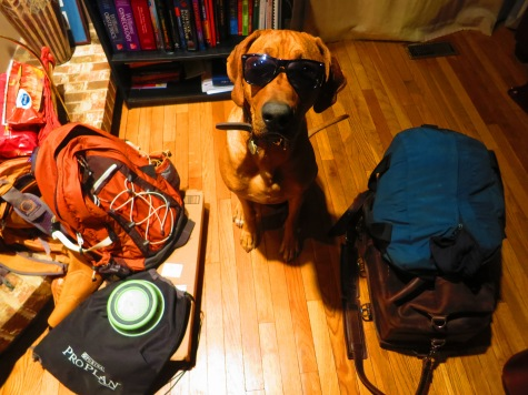Rhodesian Ridgeback, pet adventure