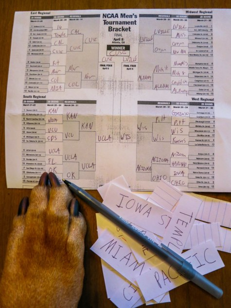 March madness, dogs