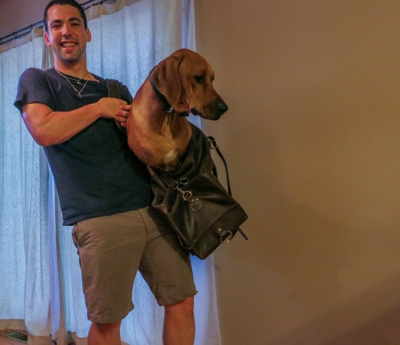 Rhodesian Ridgeback, pet-friendly apartment