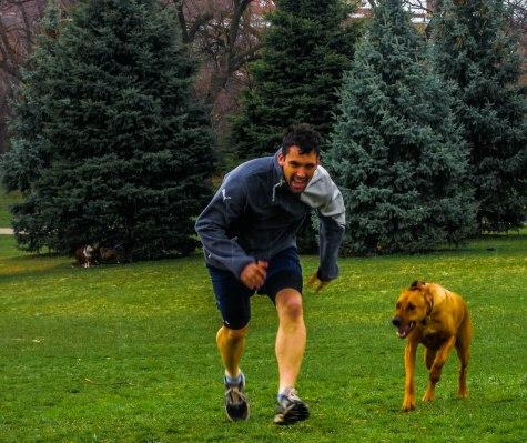 Rhodesian Ridgeback, pet blog, dog adventure