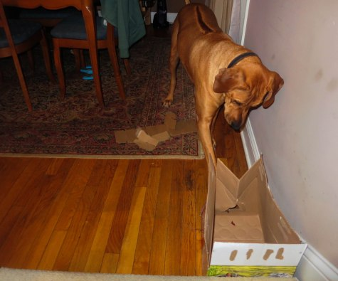 Rhodesian Ridgeback, pet adventure, petcentric, marking our territory, dog blog