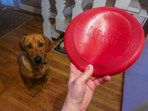 Rhodesian Ridgeback, pet adventure, marking our territory, dog blog, pet photos,