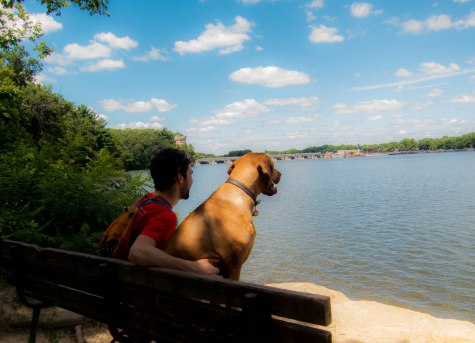 Rhodesian RIdgeback, dog adventure, dog photos, pet-friendly places, petcentric, hiking with your dog, marking our territory