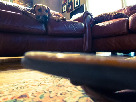 dog blog, pet adventure, petcentric, marking our territory, comfort object