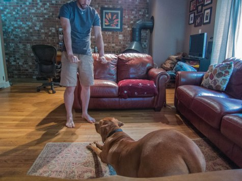Rhodesian Ridgeback, adventure, dog training, funny
