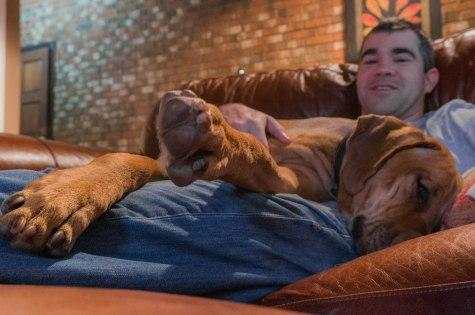 Rhodesian Ridgeback, dog, adventure, chicago, marking our territory, dog bed