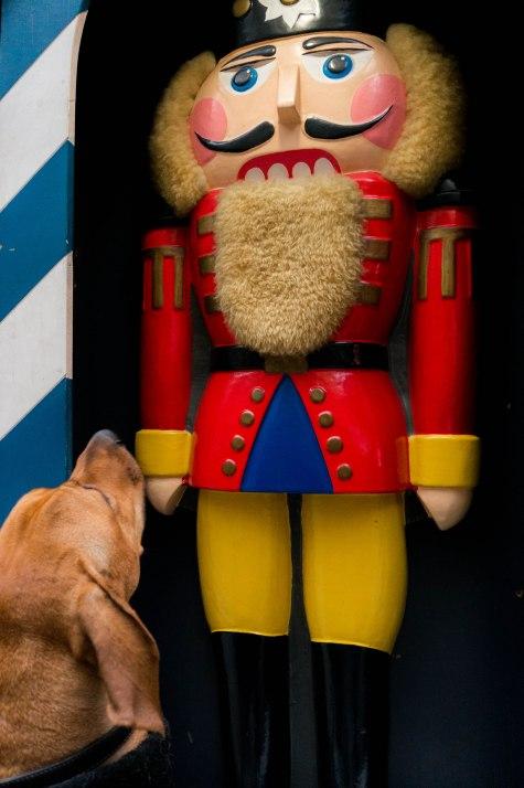 rhodesian ridgeback, dogs, adventure, chicago, pet friendly, dog blog