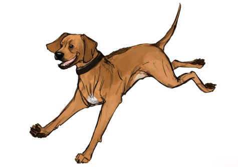 Rhodesian Ridgeback, dog blog, adventure, dogs, chicago, marking our territory, petcentric