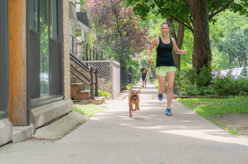 Rhodesian Ridgeback, puppy, blog, marking our territory, penny, chicago