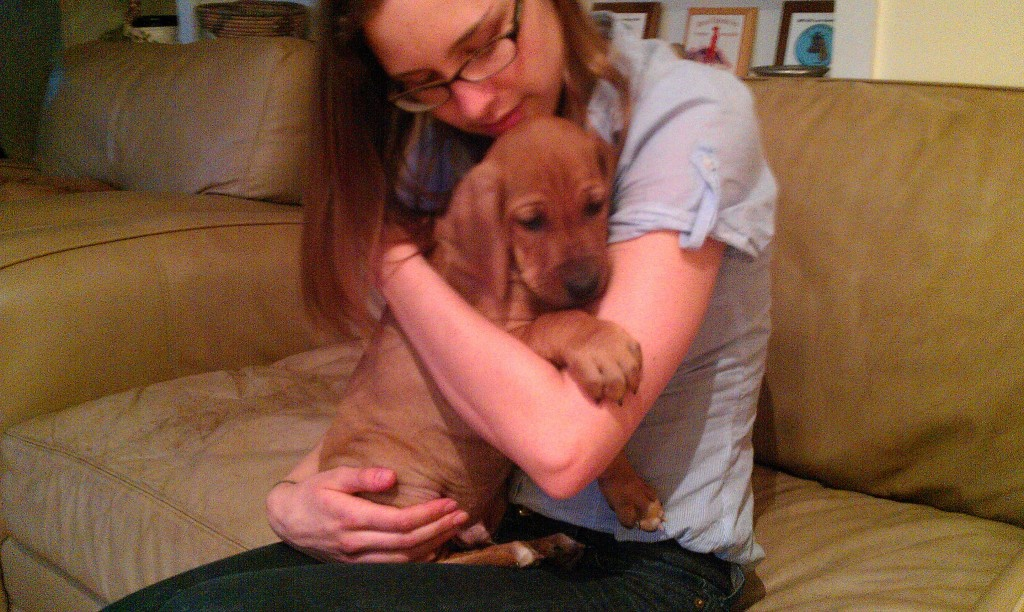 Rhodesian Ridgeback, puppy, chicago