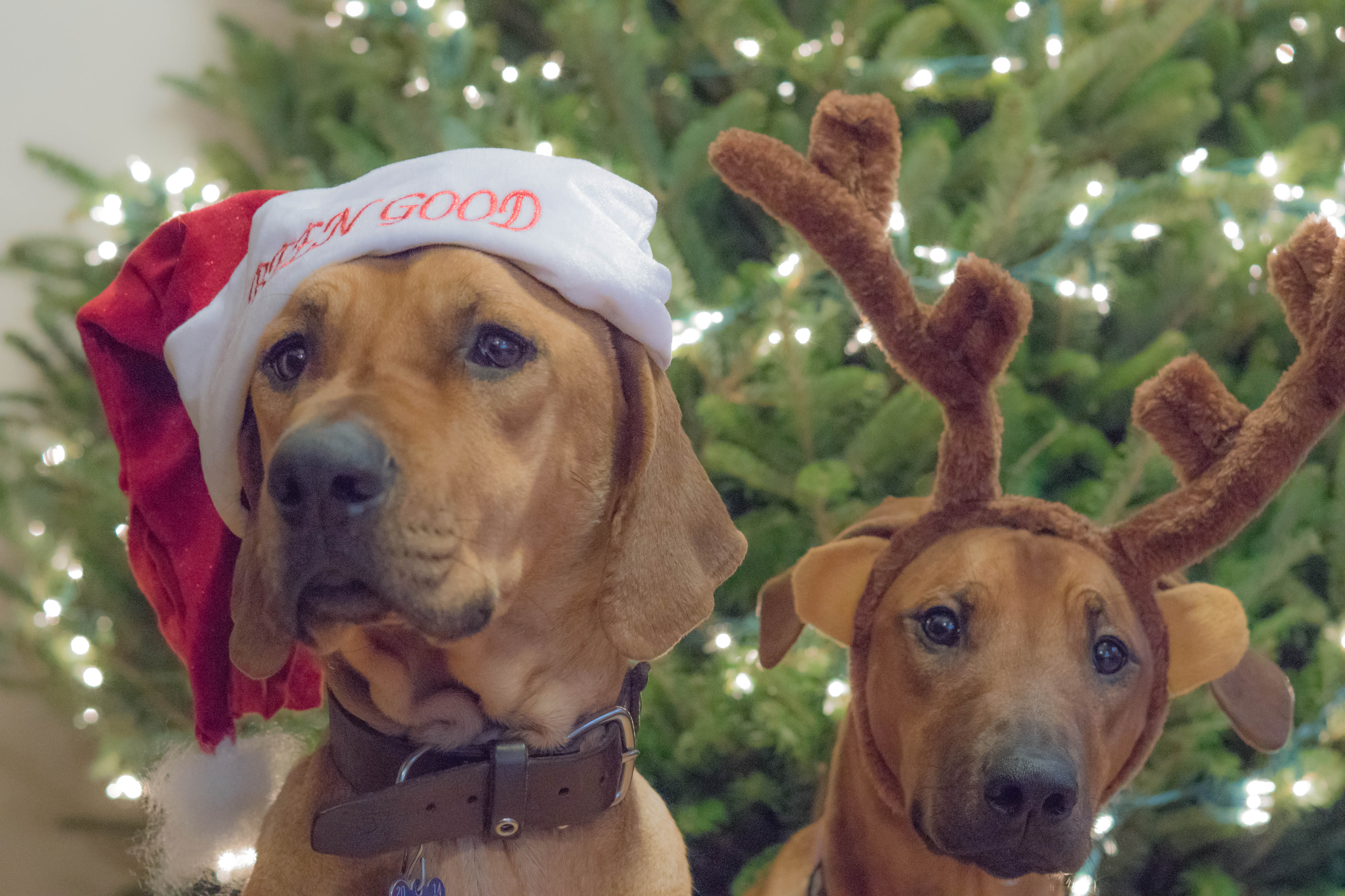 how to prepare antlers for dogs