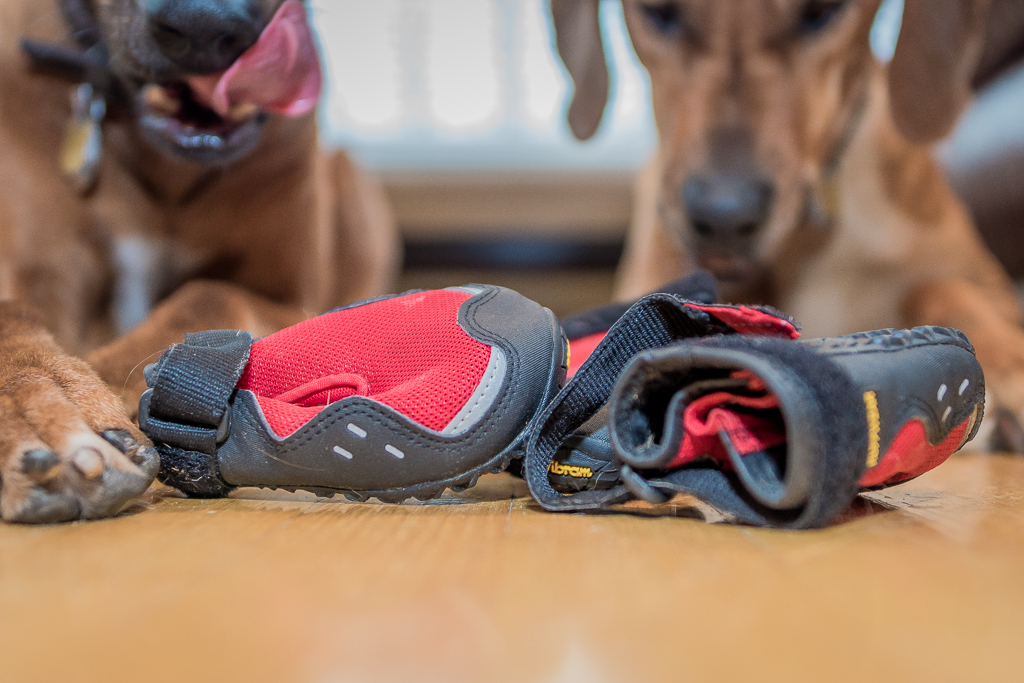 Rhodesian Ridgeback, blog, dog boots, cute, chicago, adventure