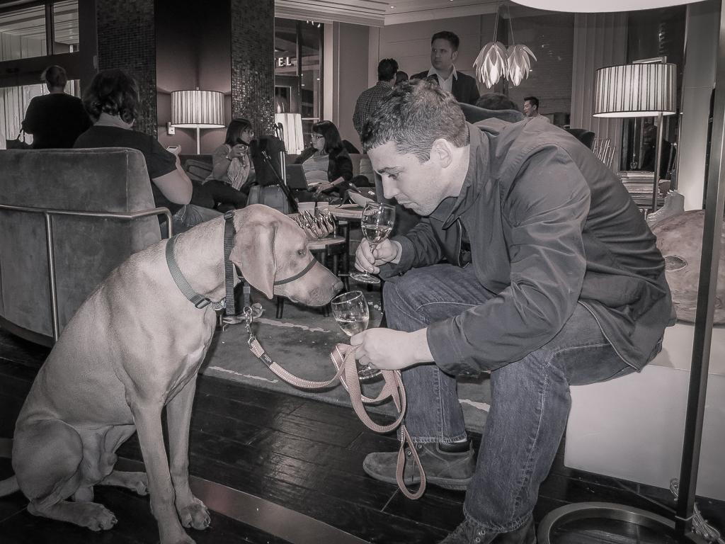 dog friendly hotel, pet friendly hotel, dog friendly travel tips
